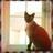 @Nimitz_Cat