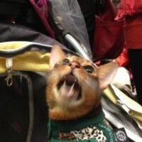 Stroller Cat | Social Profile