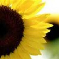 sunflowerNC | Social Profile