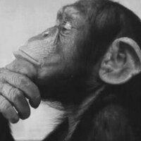 Monkeymusings | Social Profile