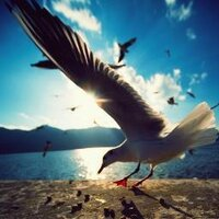 birdfly | Social Profile