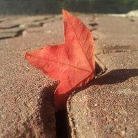 가을놀빛 | Social Profile