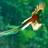 quetzal_rossi