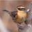 @birdscape1
