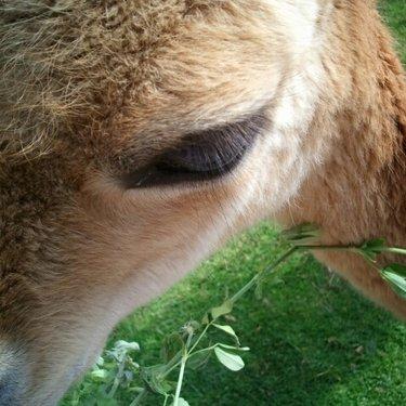 鹿 | Social Profile