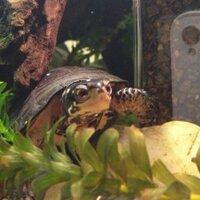 turtle guy | Social Profile