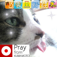ROJO(ロホ) | Social Profile