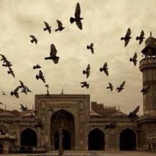 فوائد إسلامية Social Profile