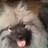 dutchdogdad profile