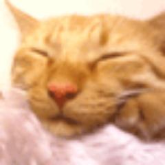 水野透子@生きてるよー Social Profile