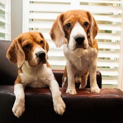 Eating Beagles | Social Profile
