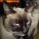 みきてぃ@C92金メ12a洋食小猫