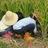 メガネノフクロウ(aka かなぴん) kanapin00 のプロフィール画像