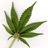 Marijuana Biz Boom