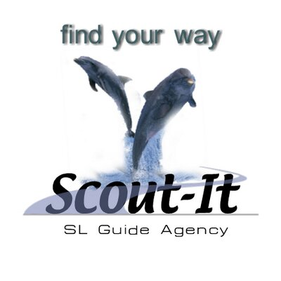 Scout-It™ | Social Profile