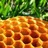 the_apiary