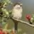 @Littlesparrow9