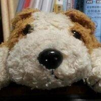 エモ犬 | Social Profile