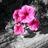 pinksilverwhite