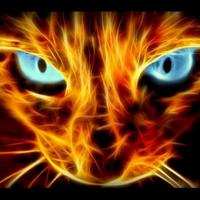 猫鼻冷 | Social Profile