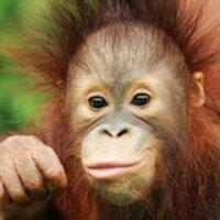 Sabah Tourism Board | Social Profile