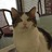 @Condo_Kitty