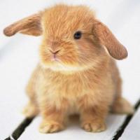 음모론 토끼 | Social Profile