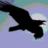 ravenwoods profile