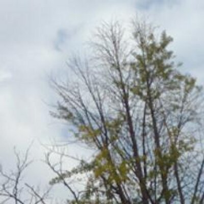 하늘나무 | Social Profile