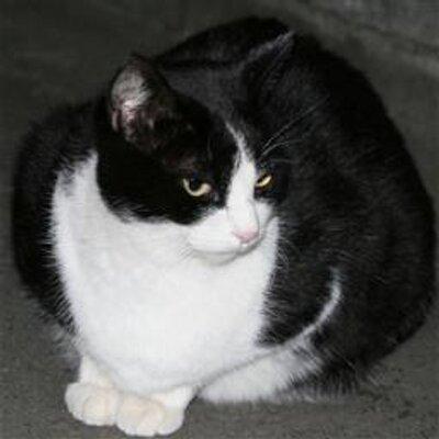 職業としての猫   Social Profile
