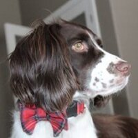 Mr. Darcy | Social Profile
