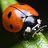ladybug923 profile