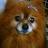 The profile image of pero0422