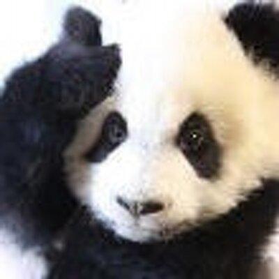 熊猫屎胖子 | Social Profile
