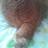 @neko_shippo_mao