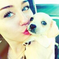 Miley's Dogs ❤ | Social Profile