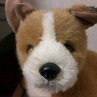 たぬさく@君の名はシン・ゴジラ | Social Profile