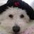 CelebWatchdog profile
