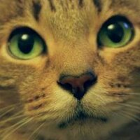 Diablo Cat | Social Profile