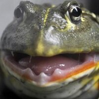 Frogstar | Social Profile