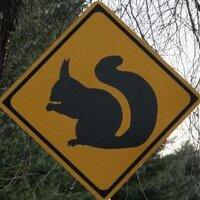 Hokkaido Squirrel | Social Profile