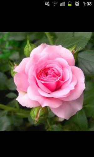الأنامل الوردية Social Profile