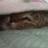 Eritomi@寝たい。のアイコン