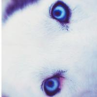 hyperwolf   Social Profile