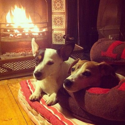 Mr Inch Jack Russell | Social Profile