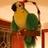 @Piratebird11