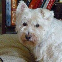 Lucy Westie | Social Profile