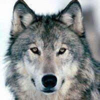 Jeffrey Wolfe | Social Profile