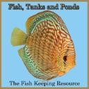 Fish Tanks and Ponds (@FishTanksandPon) Twitter