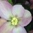 jemokoflower profile